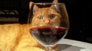 Glass of red wine in front of a ginger cat