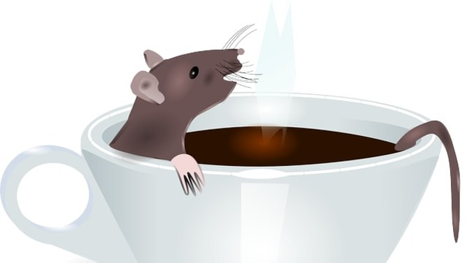 Rat Takes Coffee Bath (*this does not happen at rat cafes*)